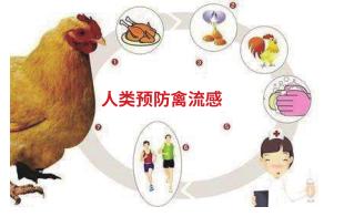 (八) 禽流感